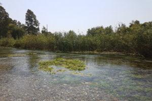 Azmak nehri- Akyaka
